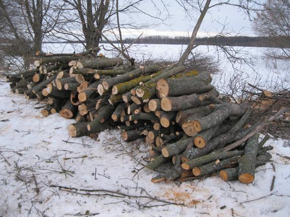 В області шукають господарів лісосмугам