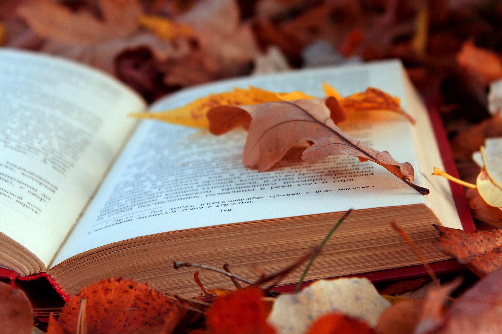 Допінг для душі та мозку: що почитати чернігівцям восени