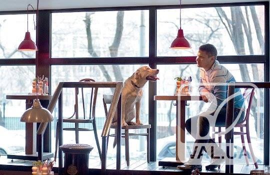 З собаками вхід… дозволено?