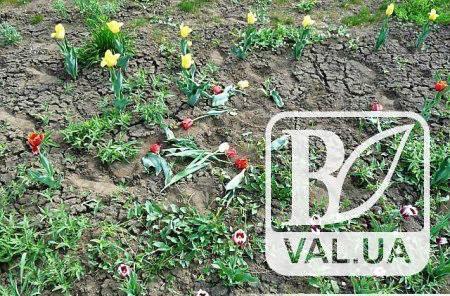 У чернігівських клумбах накрали квітів на 9 тисяч гривень