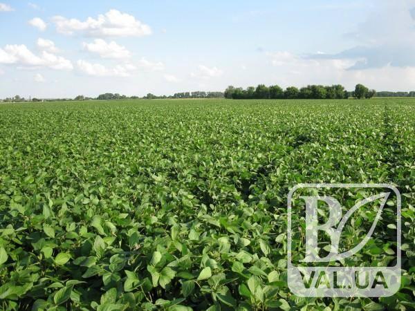 Посіви сої на Чернігівщині опинилися під загрозою
