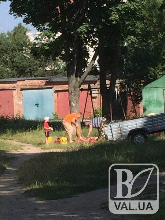 В центрі Чернігова біля дитячого майданчика закололи свиню. ФОТОфакт