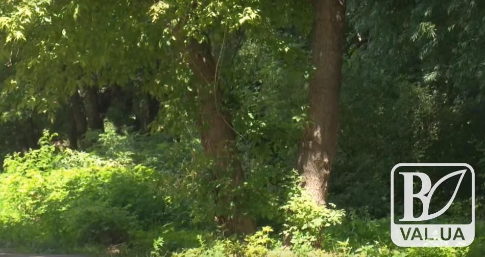 У Чернігові цього року висадять більше 700 дерев