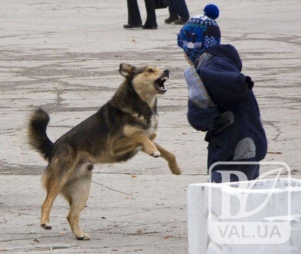 Біля чернігівської школи №34 дитину покусав безпритульний пес