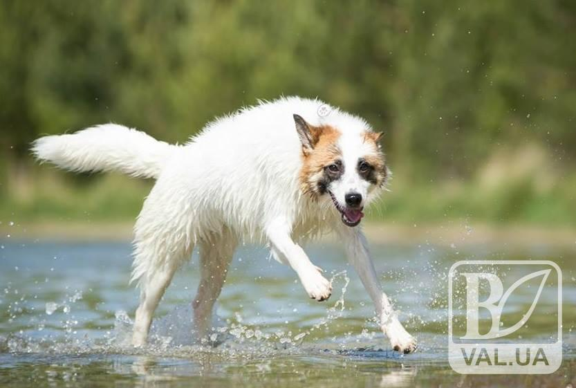 У Чернігові відбудеться незвична виставка собак