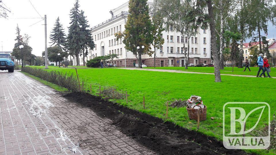 У сквері Богдана Хмельницького «зелене поповнення». ФОТО