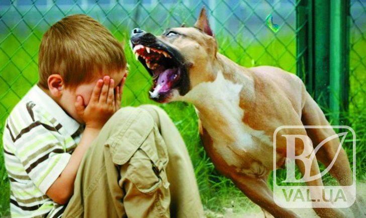 У Чернігові сусідський пес покусав 10-річну дитину