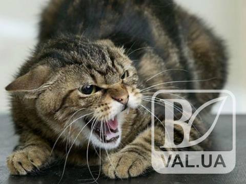 Бешенство снова атакует Черниговщину: заражение обнаружено у котов и лошади