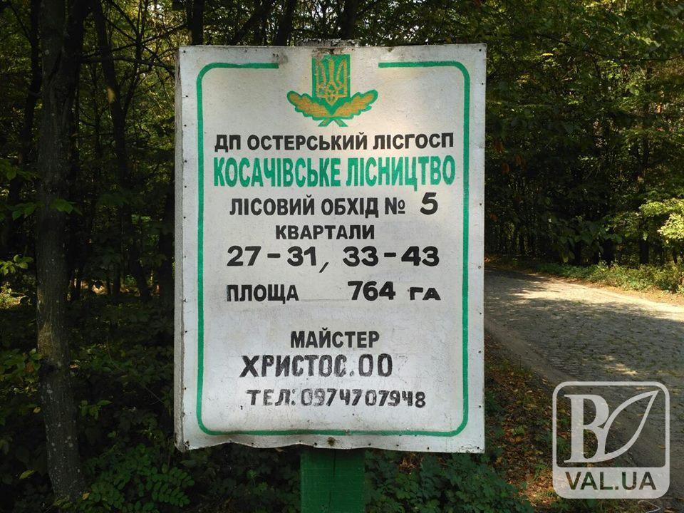 Ліси на Чернігівщині охороняє Христос. ФОТОфакт