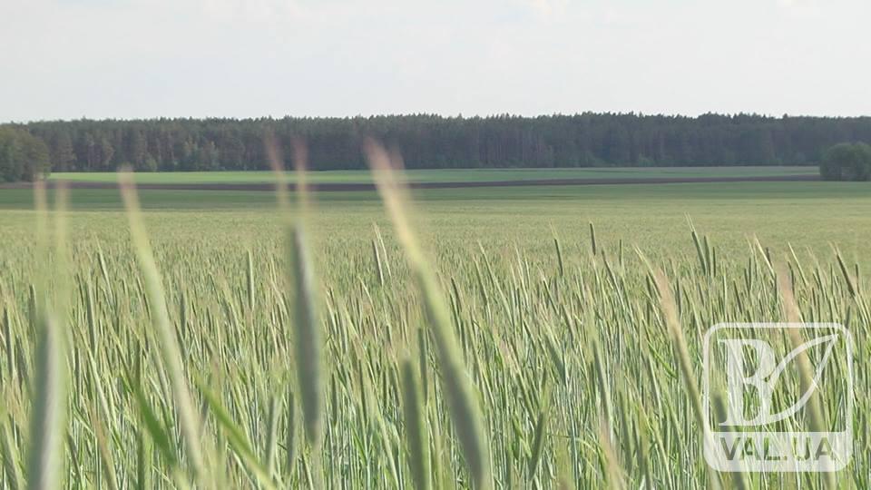 Ринку землі в Україні не бути. ВІДЕО