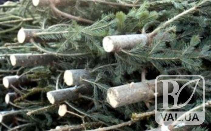 Операція «Ялинка» в розпалі: у шести районах області вже вилучили десятки незаконних дерев