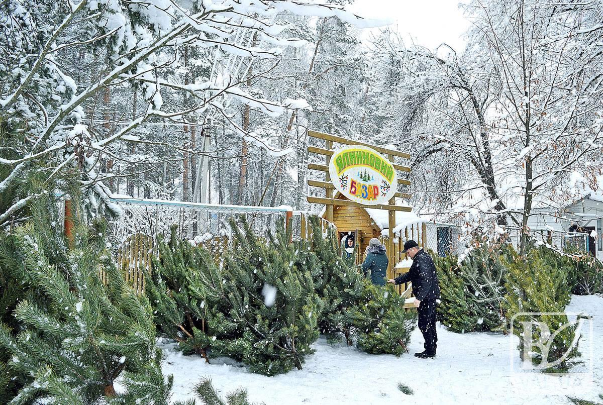 Лісівники Чернігівщини продали ялинок майже на півтора мільйони гривень