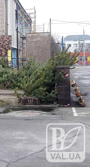 В ЖКГ Чернігова розповіли, куди подіти ялинку після новорічних свят