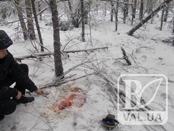 Поліція Чернігівщини відкрила кримінальне провадження за фактом вбивства лося