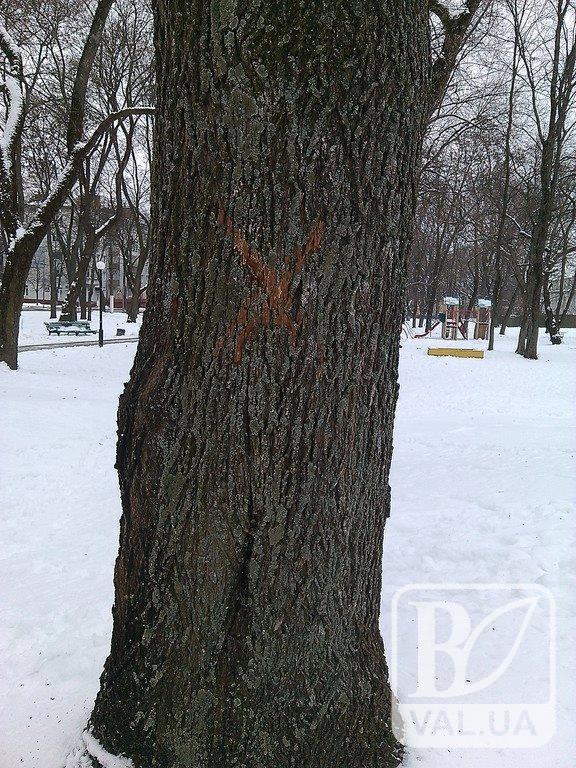 На Валу запланована вирубка дерев?