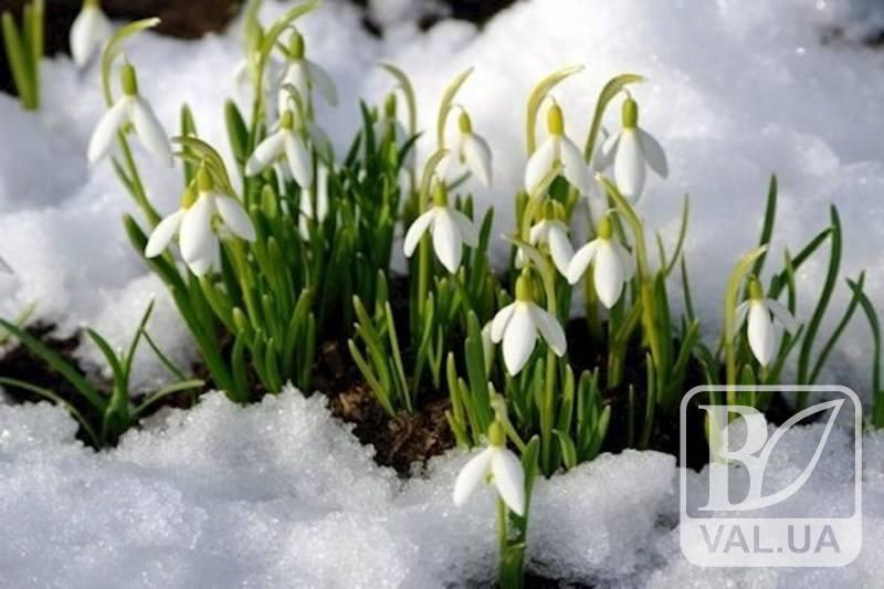 Які сюрпризи готує погода на 8 березня чернігівкам?