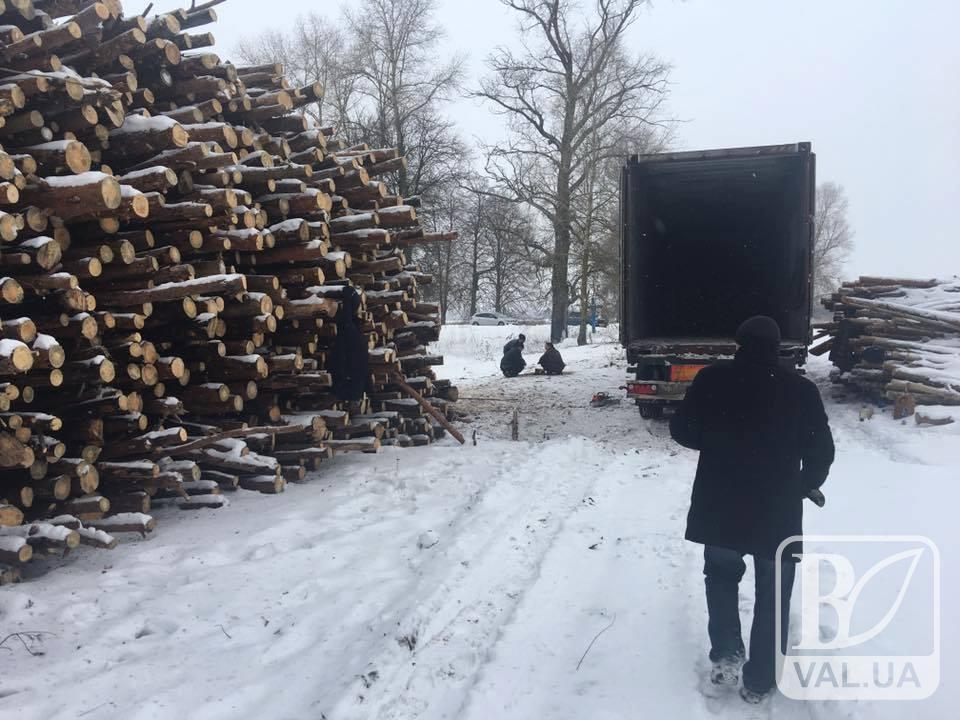 Лісова мафія дісталася передмістя Чернігова. ФОТО