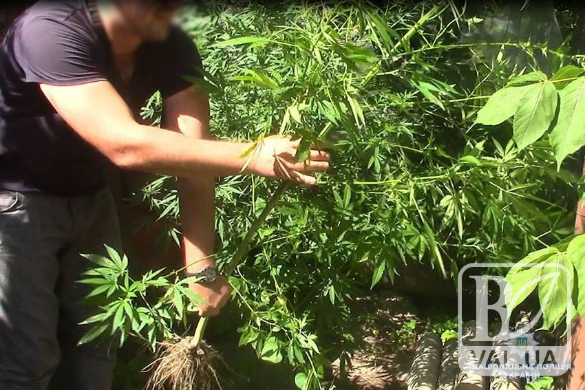 34-річний чернігівець на власному подвір'ї вирощував коноплю