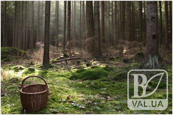 67-річна чернігівка пішла до лісу та досі не повернулась