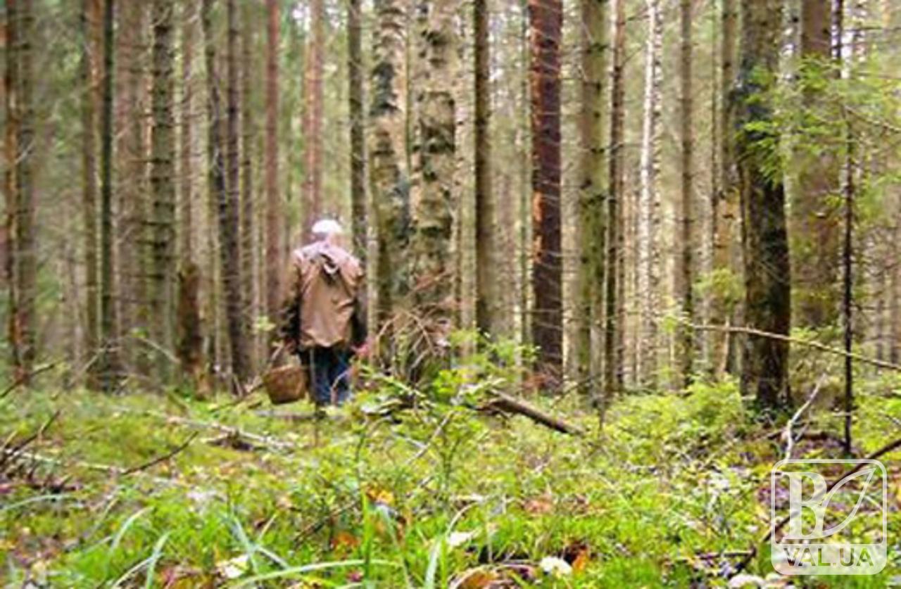 Літня чернігівка, що заблукала в лісі, знайшлась