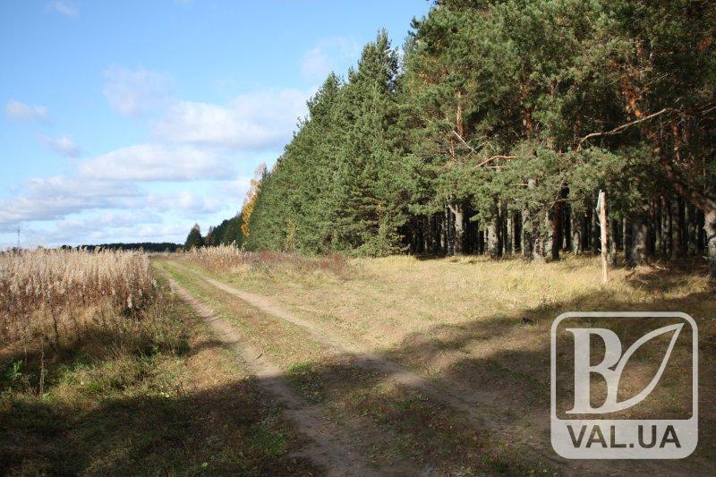 Ліс за копійки: чернігівська прокуратура намагається повернути державі 2 тисячі гектарів