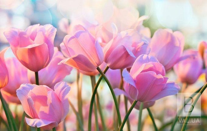 Сьогодні — 8 березня: хто і коли придумав, традиції та прикмети свята