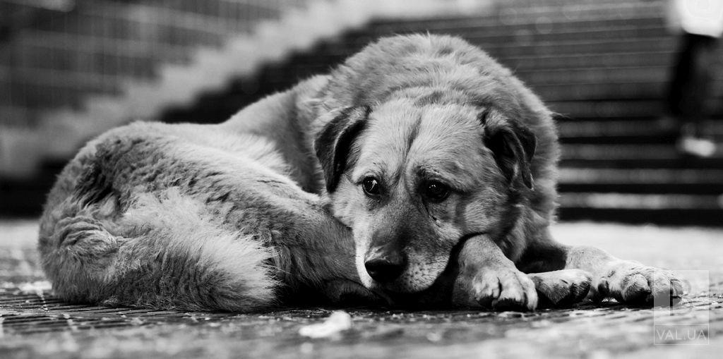У Ніжині оголосили винагороду за інформацію про вбивць безпритульних собак