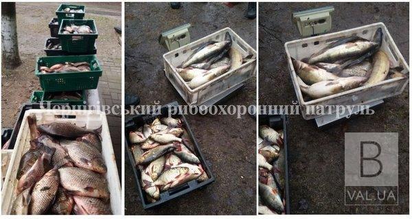 На Чернігівщині викрили нелегального скупника з понад 400 кг риби