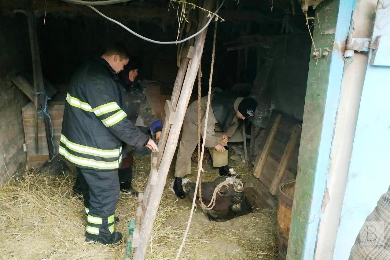 На Куликівщині рятувальники вивільнили корову, яка провалилася у льох. ФОТО