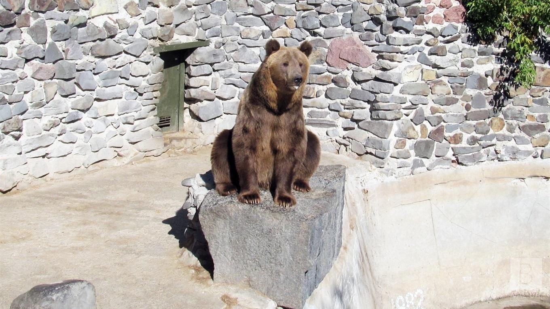 Як працює Менський зоопарк в умовах карантину