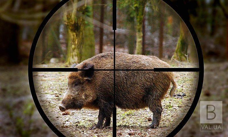 На Чернігівщині стартує сезон полювання на копитних