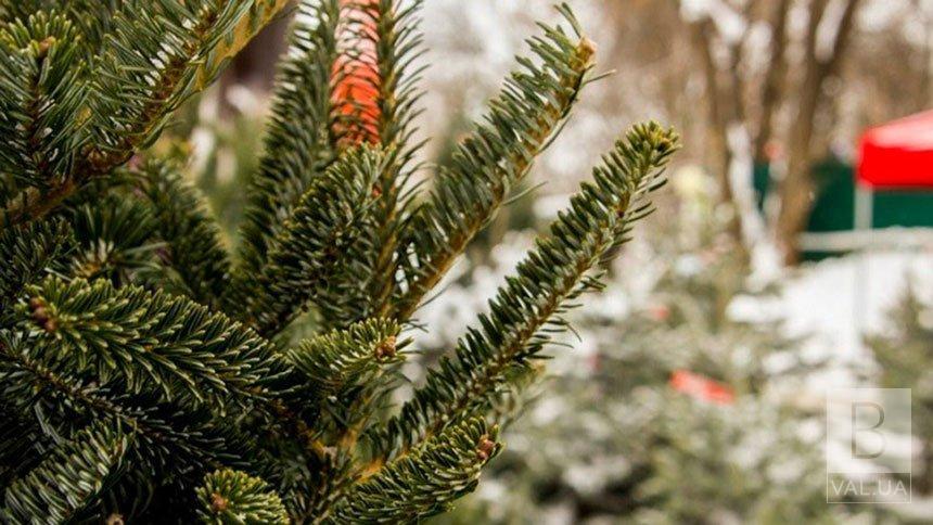 Де у Чернігові можна придбати новорічне дерево: адреси офіційних «ялинкових базарів»