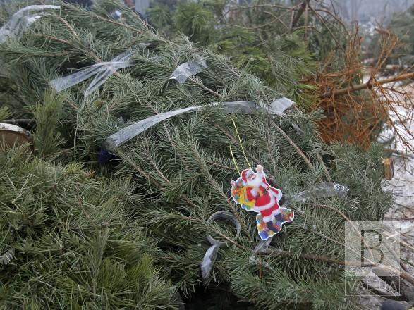 У Чернігові «Зеленбуд» приймає на утилізацію новорічні дерева