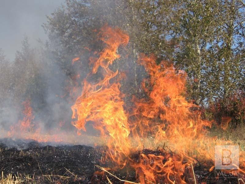 Надзвичайники оголосили на 23-25 червня найвищий рівень небезпеки пожеж на Чернігівщині