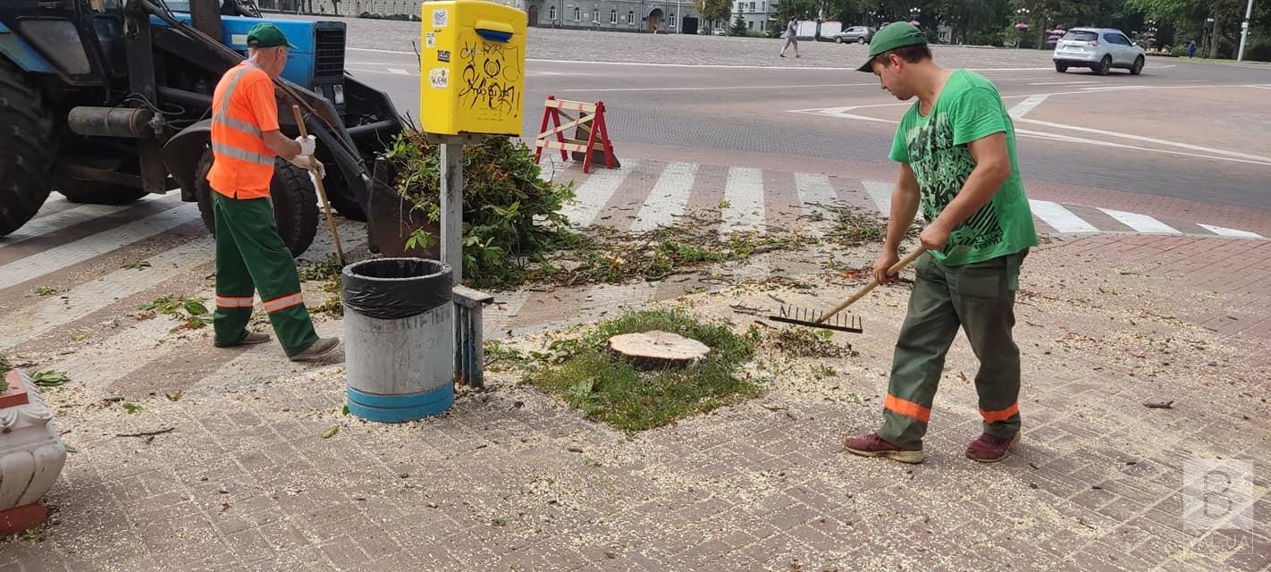 Через штормове попередження: у «Зеленбуді» пояснили, чому видалили два дерева на Красній площі. ФОТО
