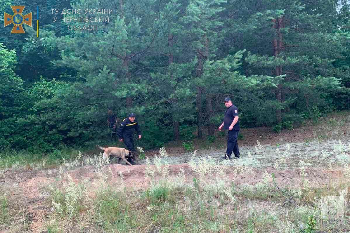 На Чернігівщині рятувальники продовжують шукати зниклу 82-річну бабусю, яка пішла по гриби