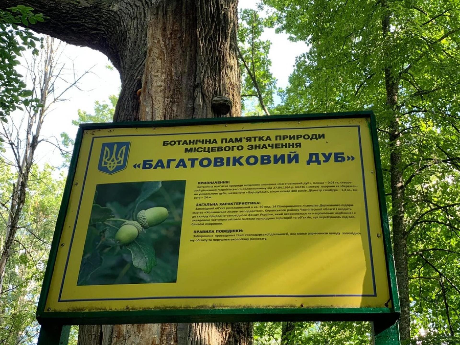 На території Мезинського парку «мешкає» живий свідок монголо-татарської навали на Чернігівщині. ФОТО