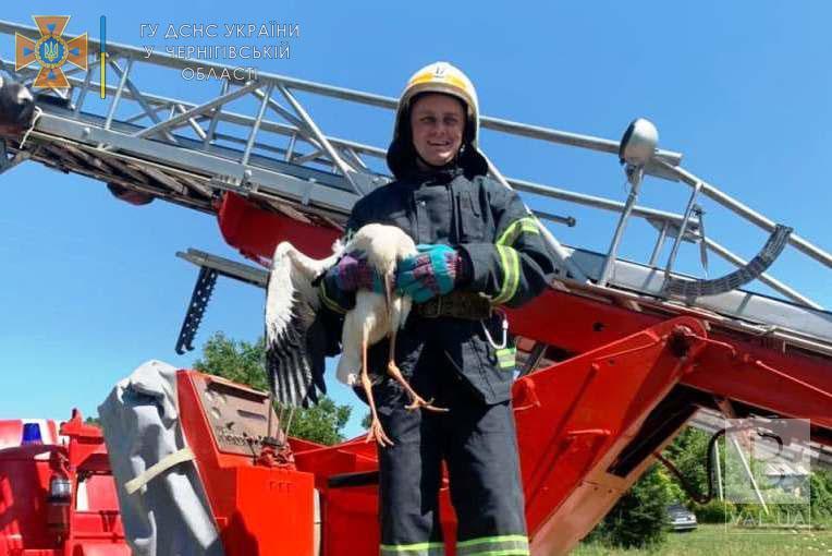 На Чернігівщині надзвичайники врятували лелеченя. Його родина загинула напередодні. ФОТО