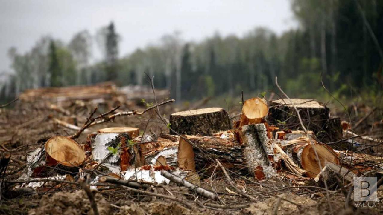 Райагролісгосп на Чернігівщині сплатив державі 450 тисяч за незаконну порубку лісу