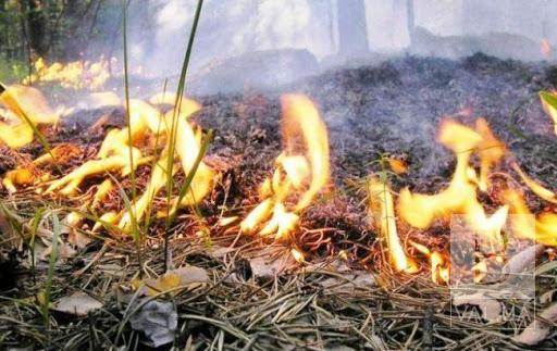 На Чернігівщині протягом двох днів очікується надзвичайний рівень пожежної небезпеки