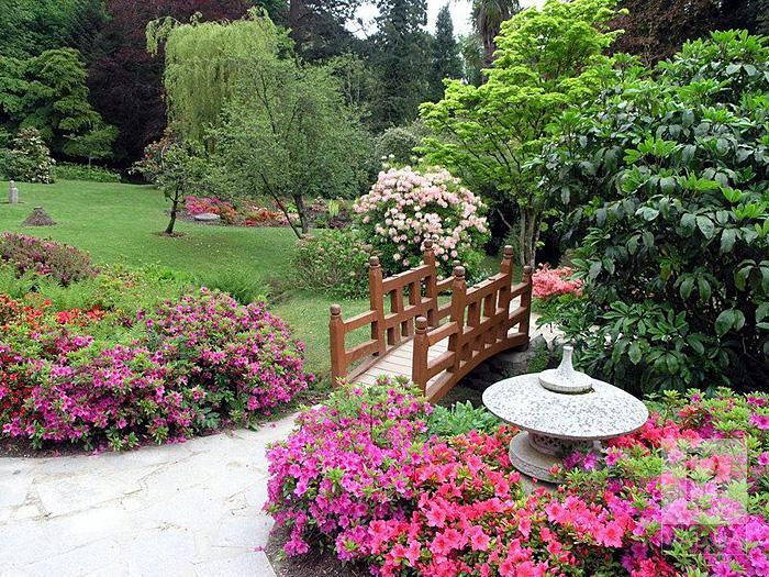 Бамбук, сад каменів та ліхтарики: «Зеленбуд» хоче створити китайський сад у Чернігові ВІДЕО