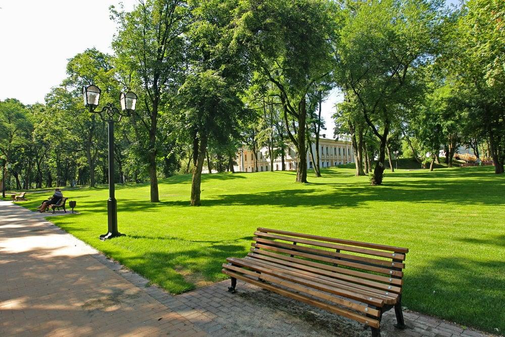 Участь в озеленні міста: Атрошенко хоче, щоб у Чернігові була його іменна вулиця чи алея