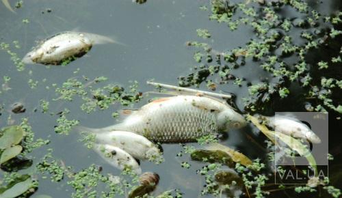 Через аномальну спеку: в області зафіксували перший випадок літньої задухи риби