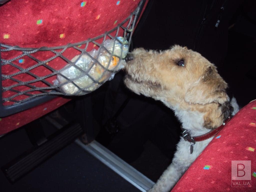 На Чернігівщині прикордонний пес Фікс знайшов «пакунки з травичкою» в автобусі «Київ-Москва». ФОТО
