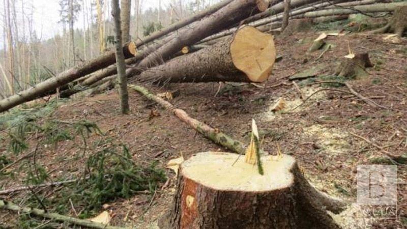 Невідомі спиляли 21 дерево: «Чернігіврайагролісгосп» відшкодував 230 тисяч гривень