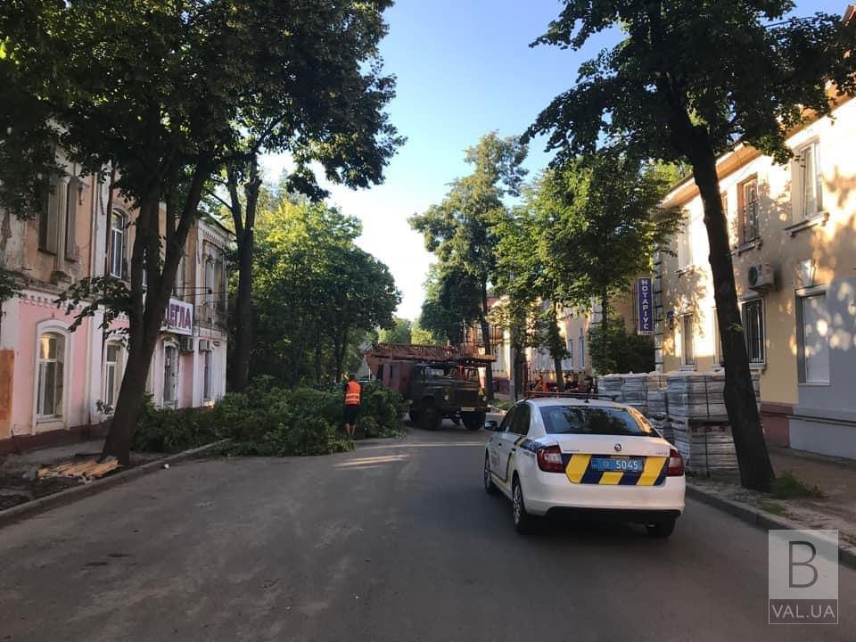 З початку року в Чернігові зрубали майже тисячу дерев