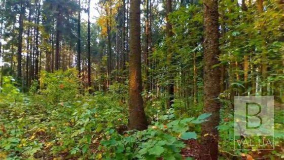 В лісі на Новгород-Сіверщині шукали 73-річного чоловіка