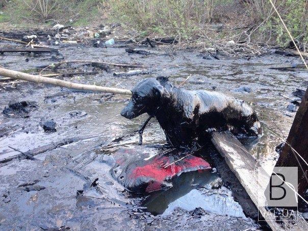 Дійшло до Верховного суду: «смоляне озеро» у Чернігові і не планують поки прибирати