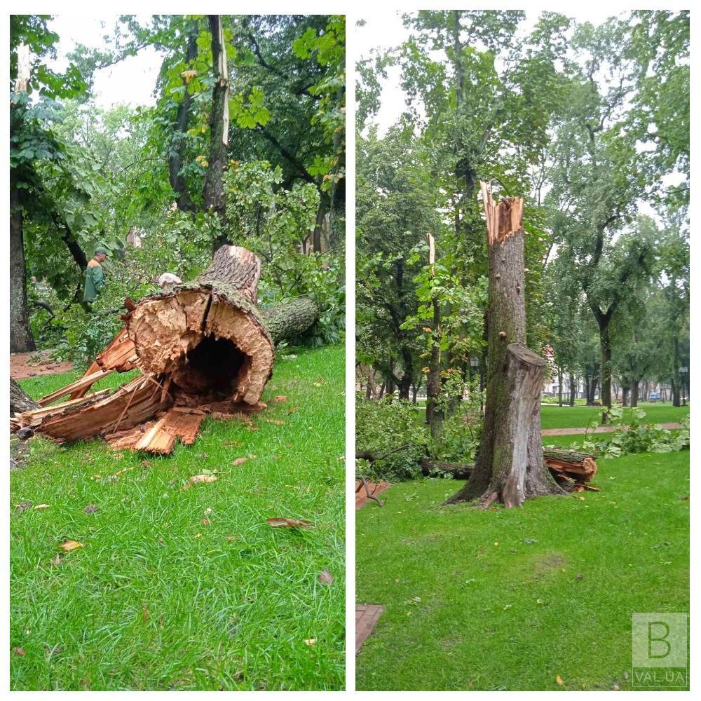 Деревопад у Чернігові: негода зруйнувала декілька дерев у парках міста. ФОТО