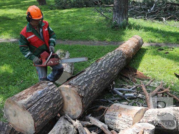 Мер Чернігова вимагає компенсації за спиляні дерева від власників гіпермаркету